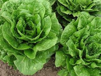 Abb. zu Artikel Biogemüse aus dem eigenen Garten